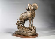 High Society big horn sheep